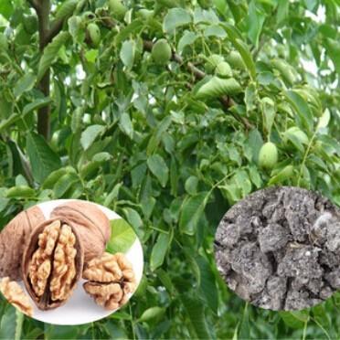 供应 干鸡粪 天然晒干纯鸡粪 绿色有机肥 核桃专用有机肥
