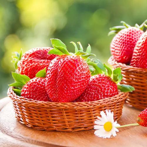 贵州产地世宇 高营养草莓