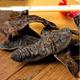 供应  野生水蛭中药材 水蛭干货清水无盐无矾100克