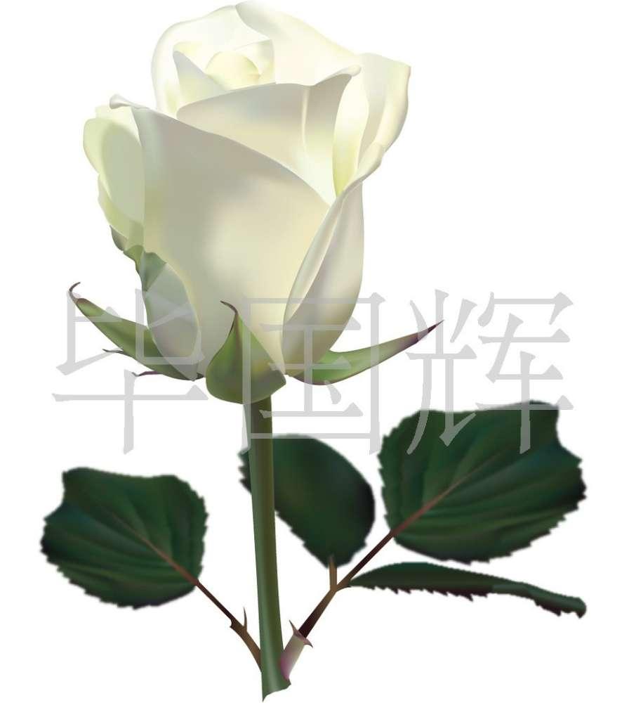 云南鲜花 国辉花卉