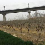 陕西省农技总站调研宪强果桑种植专业合作社