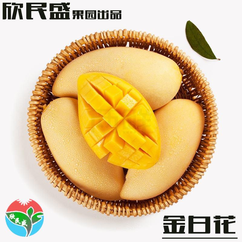 攀枝花金白花欣民盛芒果果园直发代理5斤装一件代发新鲜水果金白花芒果
