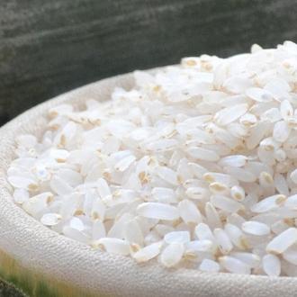 供应中长粒 种子水稻
