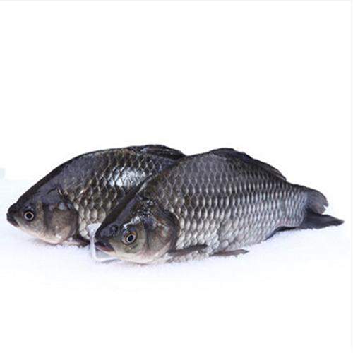 供应 新鲜鲫鱼