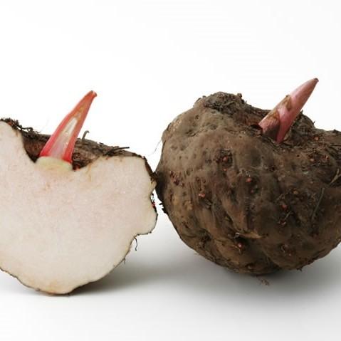 新鲜魔芋 种子 种苗 一代魔芋种