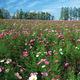 野花组合种子 耐阴耐旱  四季播种 四季开花 户外景观