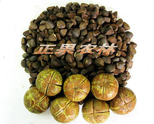 供应油茶种子