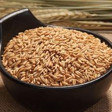 优质低价批发供应 谷味坊低温烘焙熟燕麦