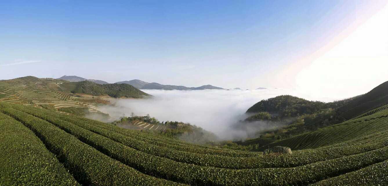 绿色静心养生茶~弥勒红茶精品