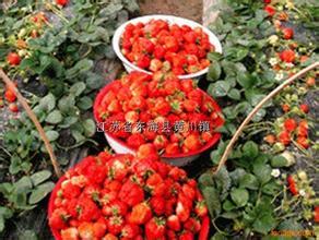 中国扩大对日本草莓的出口