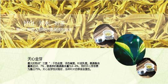 中国黄金芽交易网