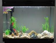 鱼缸中水草的生长条件