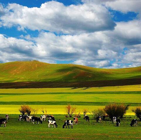 内蒙古人人益清真食品有限责任公司