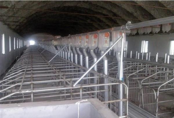 猪场自动供料_供应猪场半自动供料系统 同步下料器 料线 母猪定位栏半自动料线