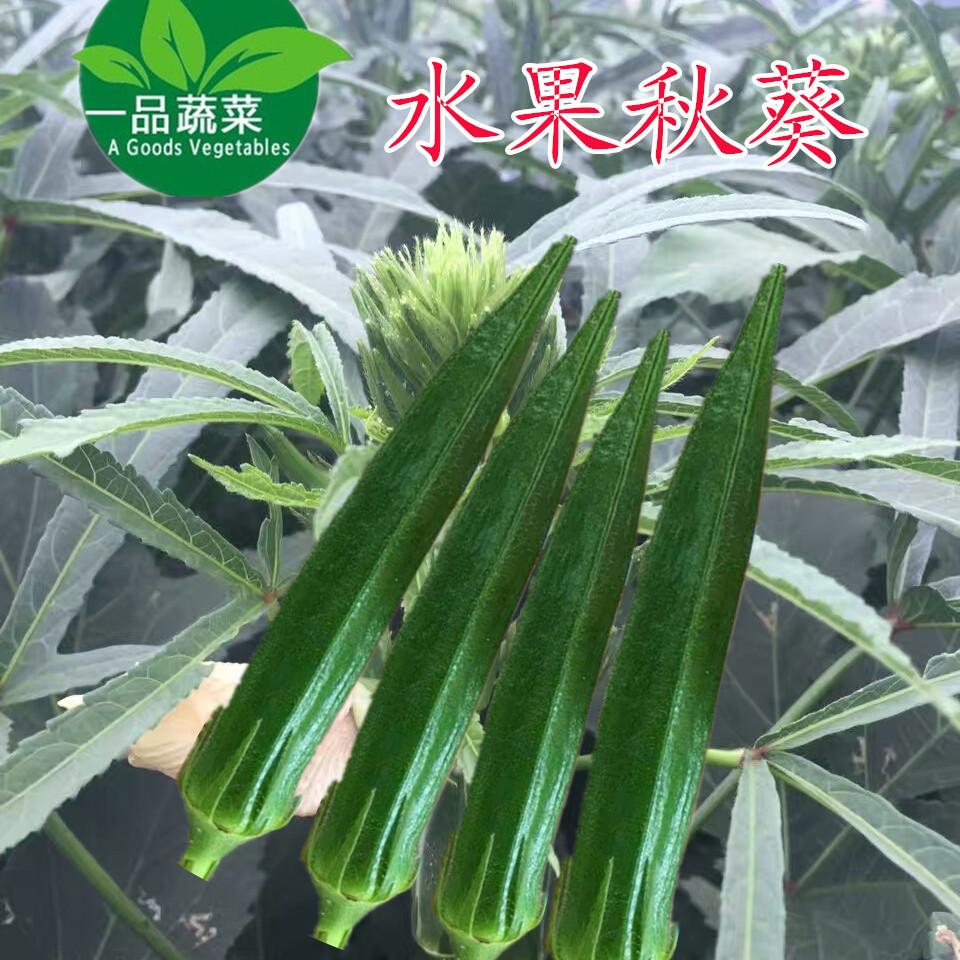 日本水果秋葵细长浓绿品种