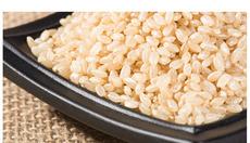 大米供应 有机糙米620g一包 玄米 胚芽米 粗粮 东北大米 五谷杂粮