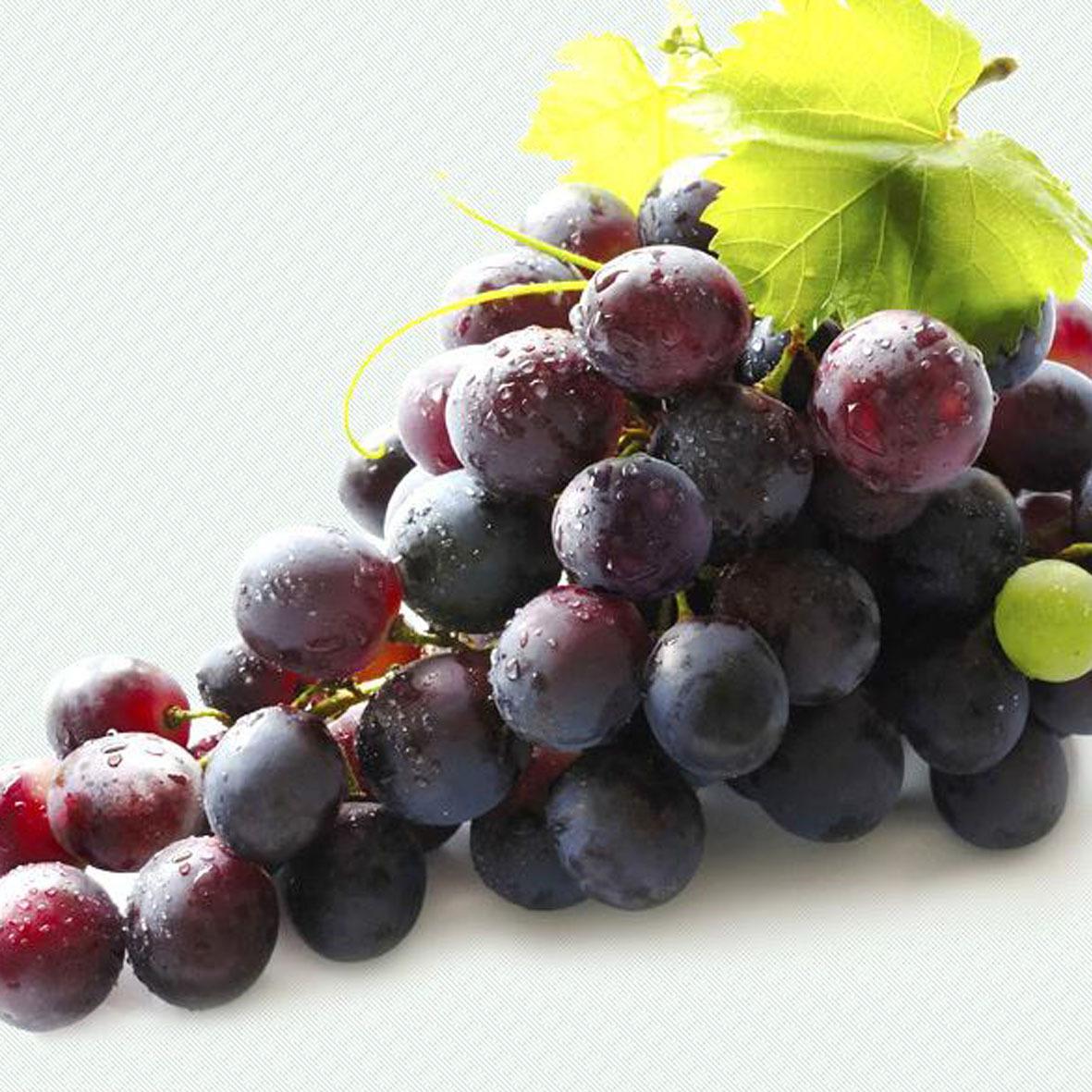 贵州 乌江红 紫葡萄