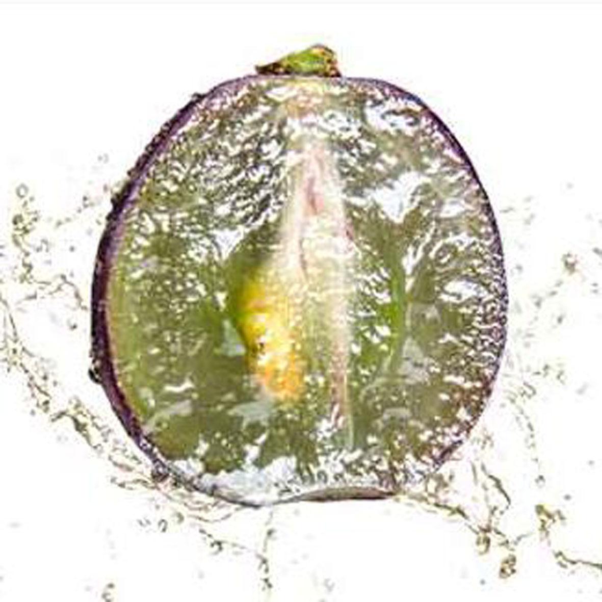 贵州特产 乌江紫葡萄