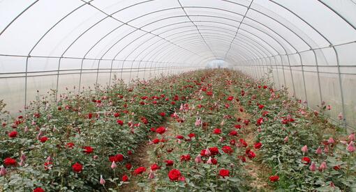 天津市静海区富农温室大棚制造厂