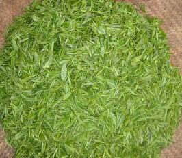 此外,中国浙江的安吉白茶和贵州正安白茶因自然变异整片茶叶呈白色,不图片