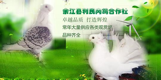 余江县利民肉鸽合作社