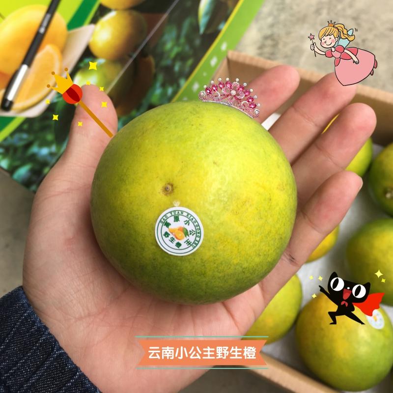 云南小公主野生橙 高原***橙  新鲜时令水果榨汁甜橙 10斤装 现摘现发