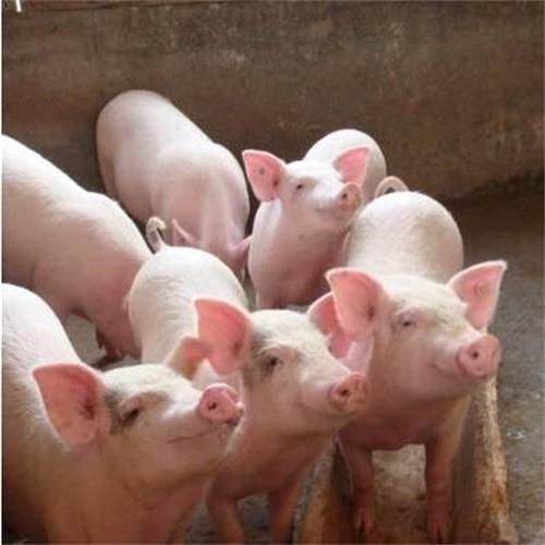 铅山县新华综合养猪场