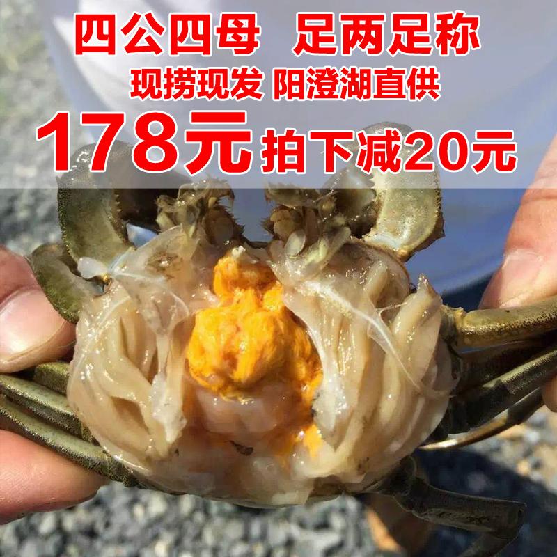 精品阳澄湖大闸蟹生态全母螃蟹鲜活红膏2.4-2.0两死包赔特价