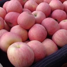 山东红富士苹果产地批发 量大从优