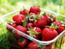章姬草莓供应