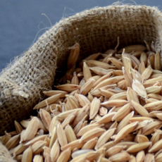 供应五常稻花香稻谷种子
