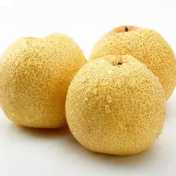 供应砀山酥梨 量大从优-中国金丝楠木交易网