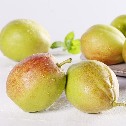 新疆正宗库尔勒香梨新鲜水果梨子一级
