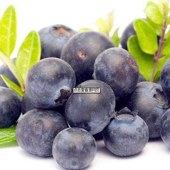 进口浓缩果汁蓝莓浓缩汁