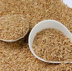 优质低价批发供应 新燕麦米