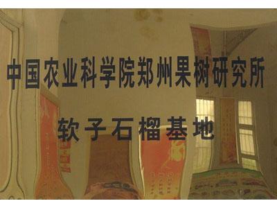 中国农业科学院郑州果树研究所——软籽石榴基地