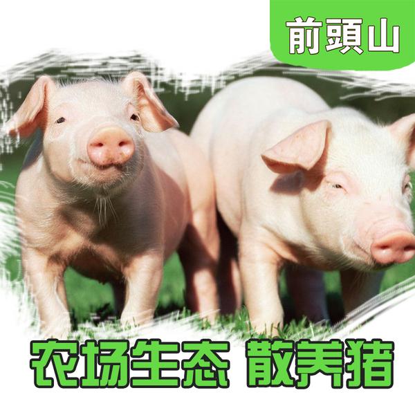 农家生态猪 无污染无激素 放心食用