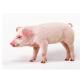 【仔猪预混合饲料】正昌0.5%仔猪预混料 绿色核心料