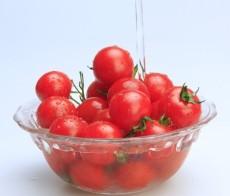 大量供应小西红柿