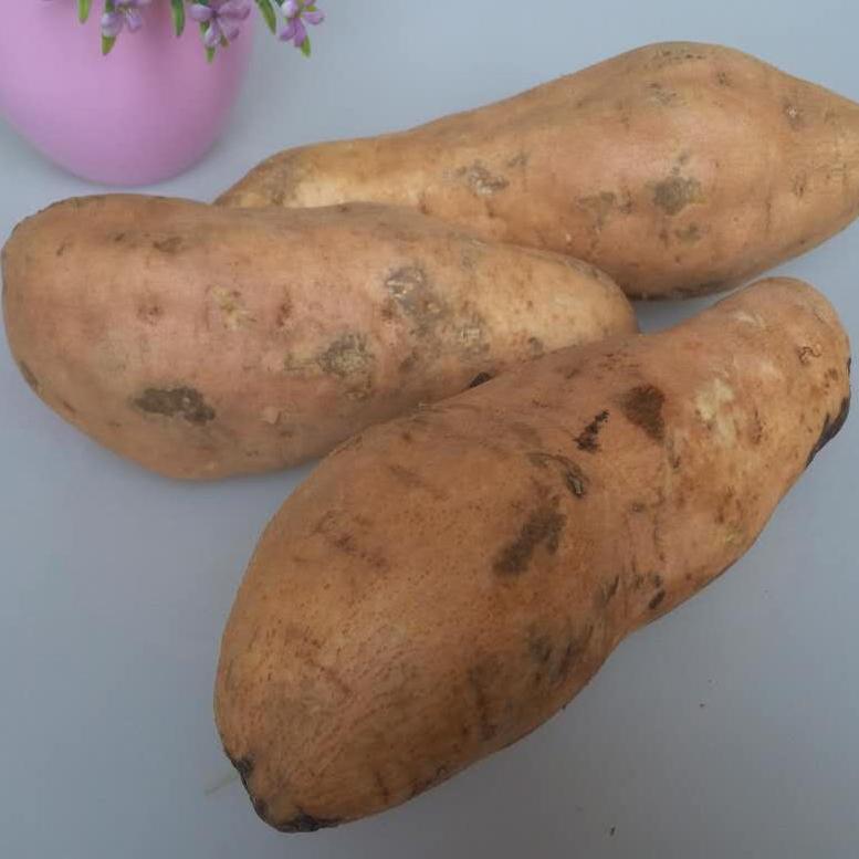 精品新鲜红薯生地瓜番薯有机山芋黄心农家自产地瓜 老黄皮