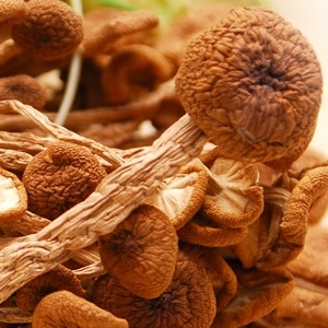 美味茶薪菇 茶薪菇  茶树菇 美味茶薪菇
