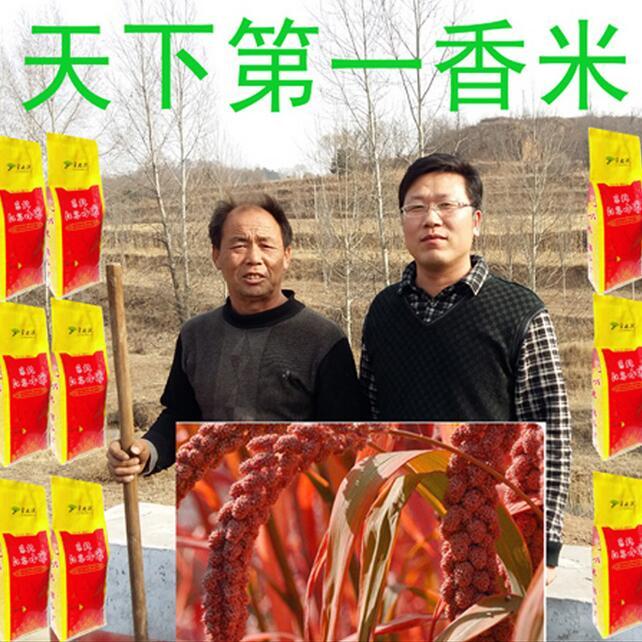 小米 2015年东北红谷小米 有机杂粮 淘宝一件代发 1000克