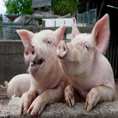 重庆市涪陵区水碧生猪养殖场