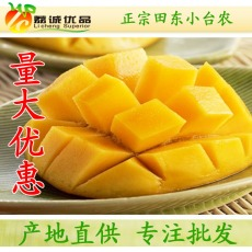 广西热带新鲜水果百色田东芒果小台农批发 特价2元/斤