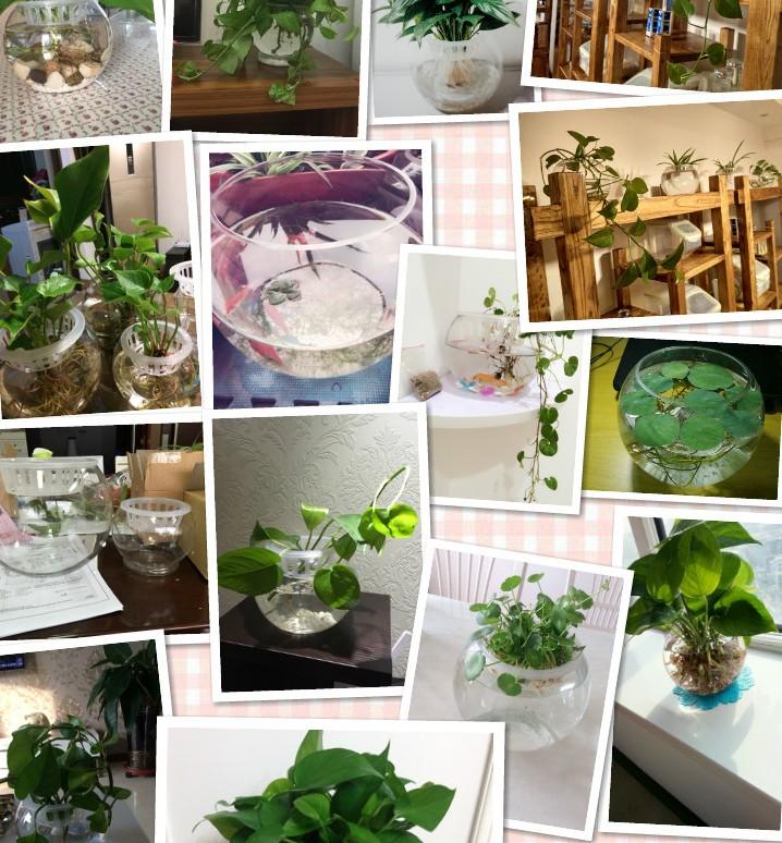 批发圆形透明玻璃金鱼缸水族大号乌龟缸绿萝水培植物缸微景观