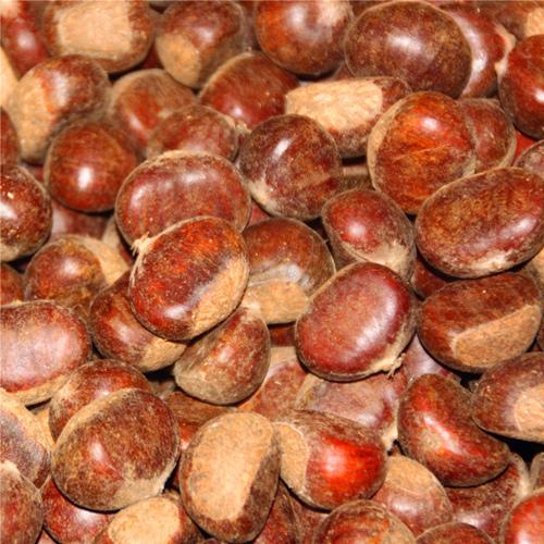 供应  新鲜野生 优质生板栗 油栗批发 出口标准