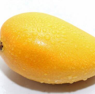 供应 优质芒果 果园直供