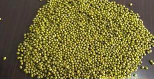 工艺批发优质杂粮绿豆有机绿豆