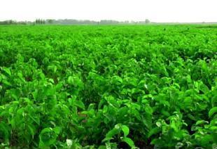 桑蚕基地特产 100%桑蚕丝纯手工儿童幼儿蚕丝被