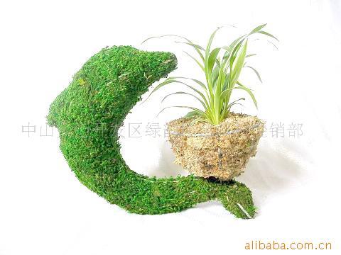 供应苔藓动物花盆